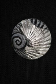 Mist Shell Brooch