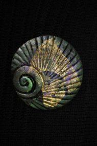 Spruce Shell Brooch